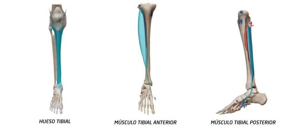 Periostitis tibial anatomía